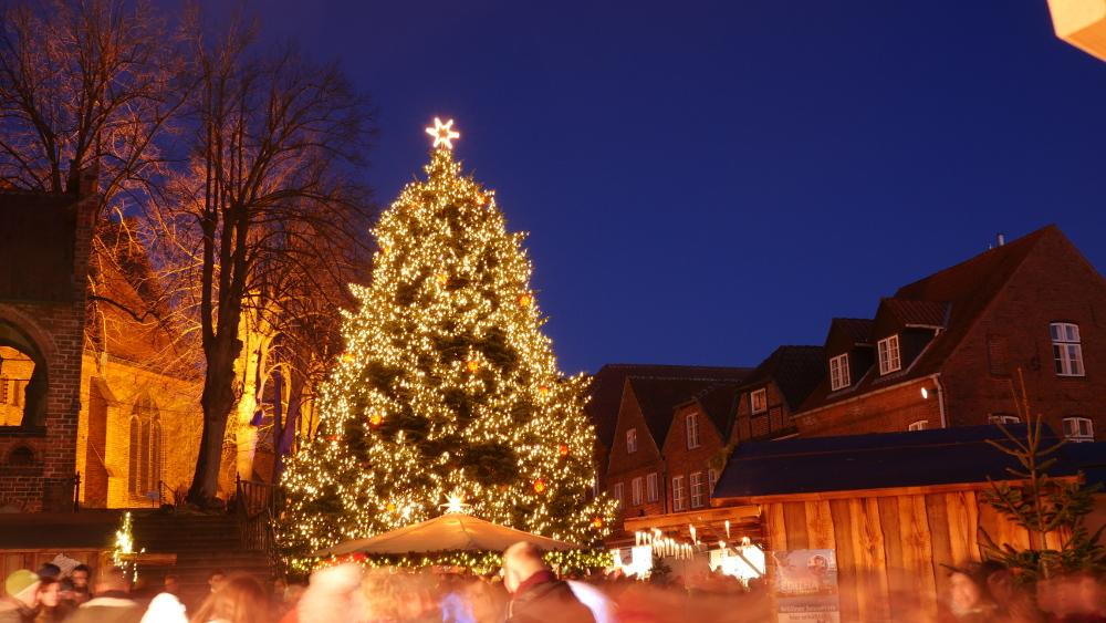 m lln sucht einen weihnachtsbaum herzogtum direkt. Black Bedroom Furniture Sets. Home Design Ideas