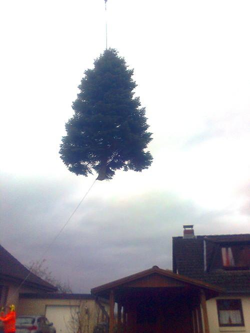 Weihnachtsmarkt Ratzeburg.Weihnachtsbaum Auf Dem Ratzeburger Marktplatz Kündigt Von Der Nahen