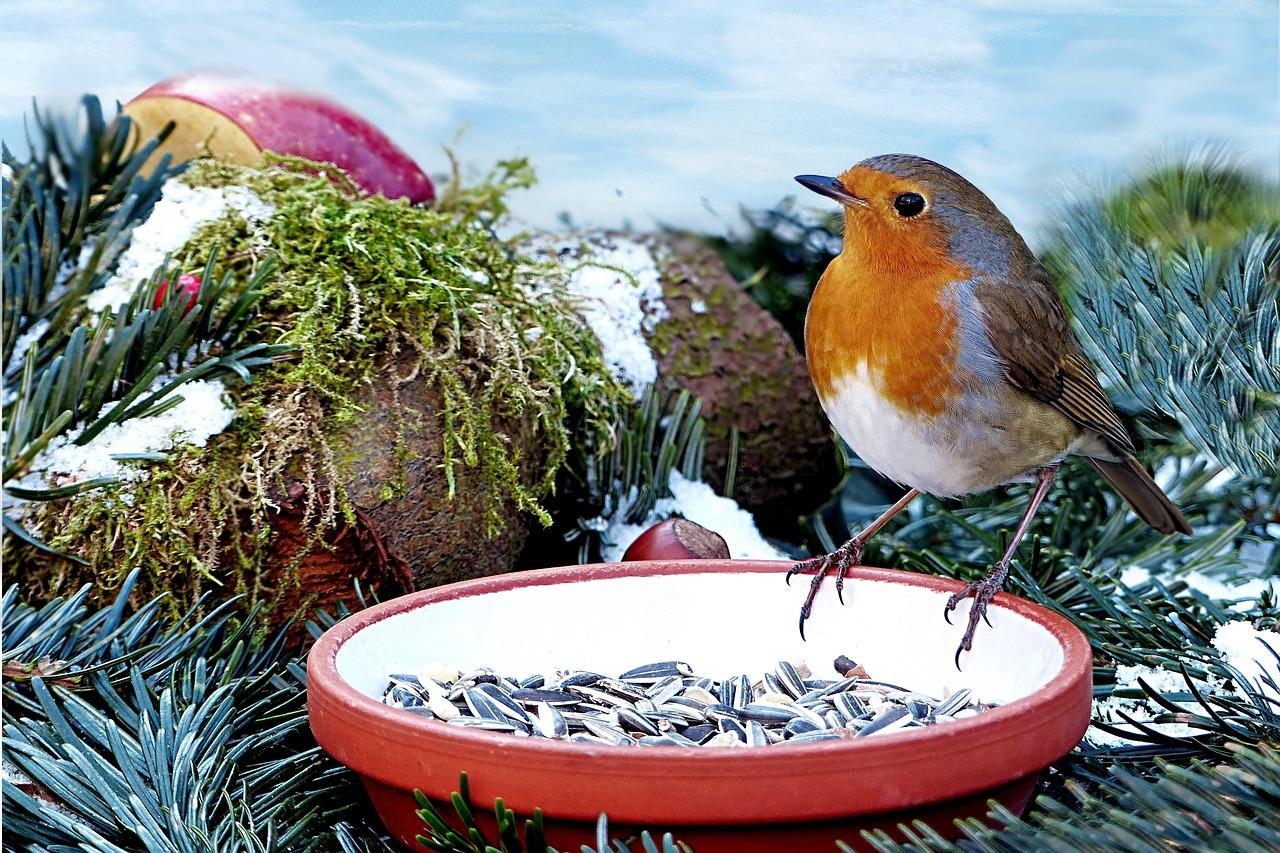Vogel Futtern Im Winter Herzogtum Direkt